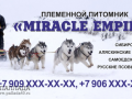 Miracle Empire